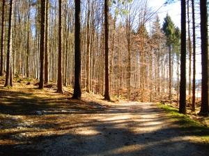 bosco-a-sanna-2308
