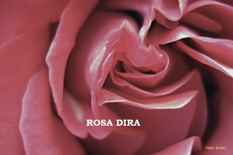 rosa dira
